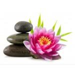 Thai Retreat Massage & Bodywork